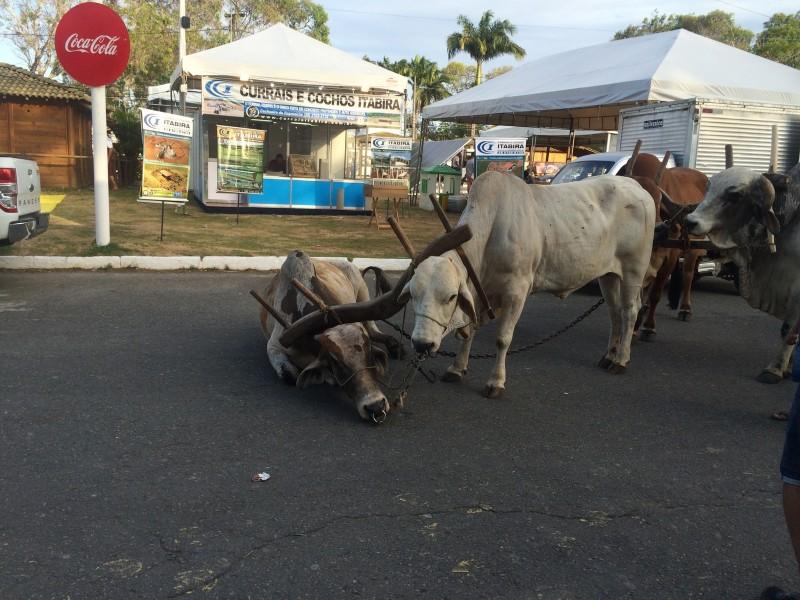 Aps-morte-de-cavalo-novas-imagens-revelam-maus-tratos-de-animais-na-Fenagro