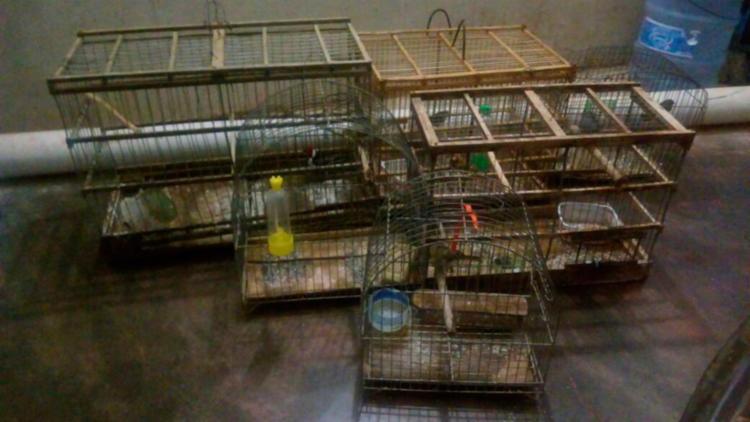 Trs-pessoas-so-presas-com-drogas-e-aves-silvestres-em-Lapo