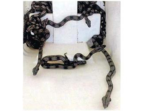 Cobras-tomam-conta-do-Hospital-Ernesto-Simes-Filho