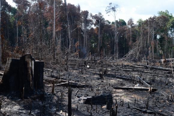 Alertas-de-desmatamento-na-Amaznia-Legal-caem-20