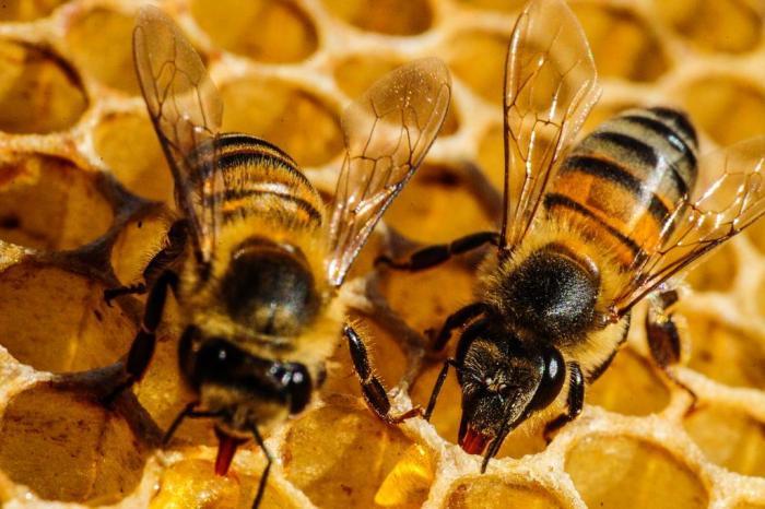 Agrotxico-mais-encontrado-em-frutas-e-verduras-no-Brasil-fatal-para-abelhas