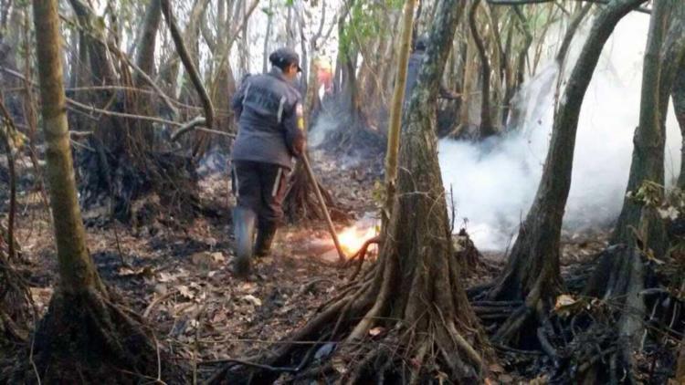 Bombeiros-combatem-incndio-em-rea-ambiental-de-Praia-do-Forte