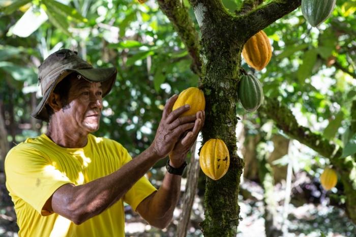 Cacau-e-mandioca-so-destaques-no-Rural-Produtivo-na-TVE