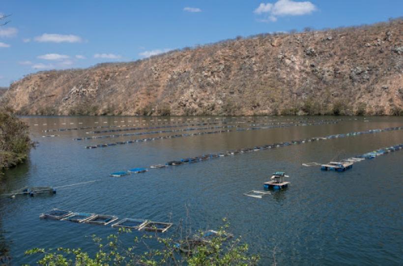 Bahia-lana-ferramenta-para-elevar-produtividade-da-piscicultura