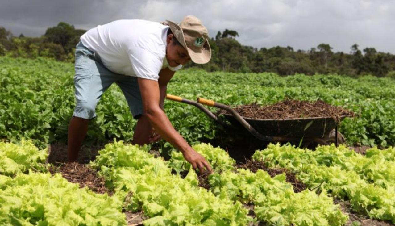 Aprenda-sobre-cultivo-e-aproveitamento-de-hortalias
