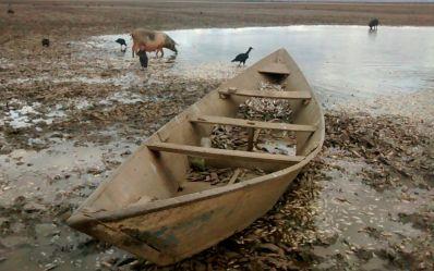 Milhares de peixes morrem após lagoa perder volume de água em Xique-Xique