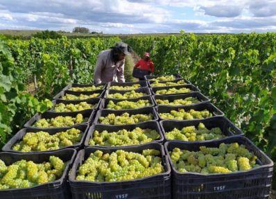 Vinho produzido no Morro do Chapéu ganha prêmio nacional