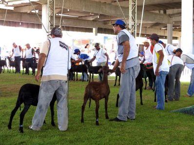 Com opções de lazer e venda de animais, Fenagro terá 9 dias de programação na Bahia