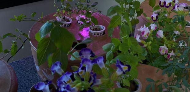 Startup baiana desenvolve horta hidropônica para espaços pequenos
