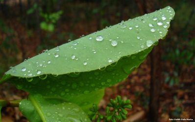Previsão de chuva para Central durante a semana