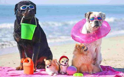 Mundo Pet orienta sobre cuidados com pets no verão
