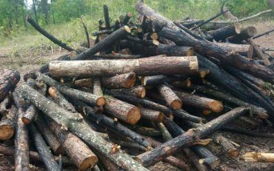 Onze são presos por desmatar área de proteção ambiental