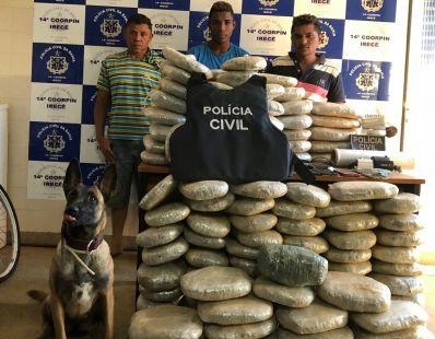 Cão da Polícia Civil localiza 132 kg de maconha enterrados em Irecê