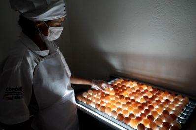Ovos produzidos em comunidades rurais ganham espaço no mercado