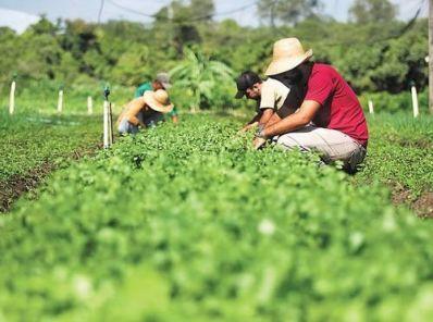 Linha de crédito é disponibilizada para agricultura familiar na BA