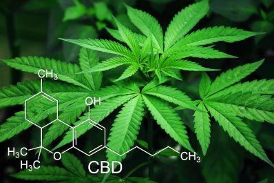 União vai incluir na lista do SUS medicamentos à base de Cannabis