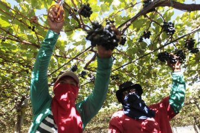 Bahia produz mais de 30% das frutas do país