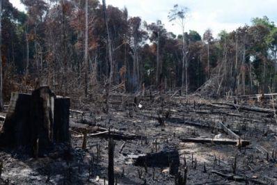 Alertas de desmatamento na Amazônia Legal caem 20%