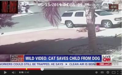Gata salva vida de garoto nos EUA; assista vídeo
