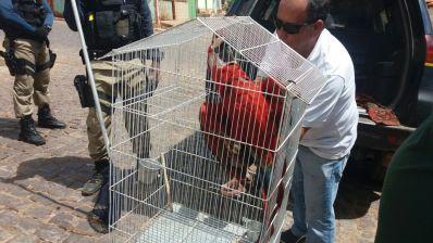 FPI resgata mais de 200 animais silvestres na região de Santa Maria da Vitória