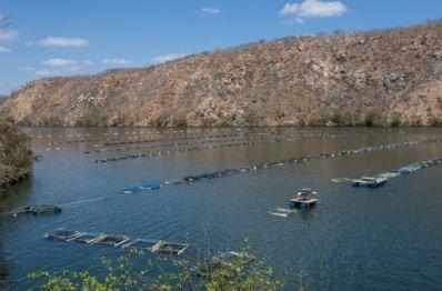 Bahia lança ferramenta para elevar produtividade da piscicultura