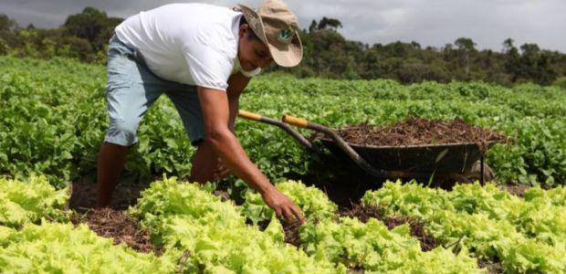 Aprenda sobre cultivo e aproveitamento de hortaliças