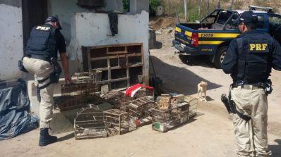 Operação em três cidades baianas resgata 56 animais criados ilegalmente