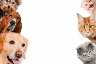 Sete cuidados que você deve ter com seu pet no verão