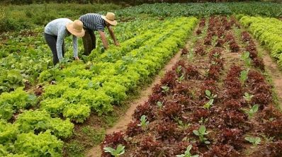 Agricultura Familiar: Bahia investe cerca de R$ 3,8 milhões no Semiárido