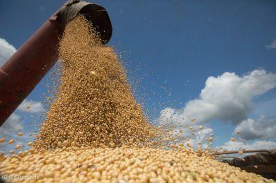Oeste da Bahia registra safra recorde de grãos e fibra